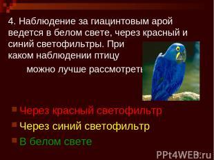 * 4. Наблюдение за гиацинтовым арой ведется в белом свете, через красный и синий