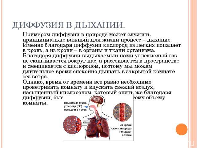 ДИФФУЗИЯ В ДЫХАНИИ. Примером диффузии в природе может служить принципиально важный для жизни процесс – дыхание. Именно благодаря диффузии кислород из легких попадает в кровь, а из крови – в органы и ткани организма. Благодаря диффузии выдыхаемый нам…