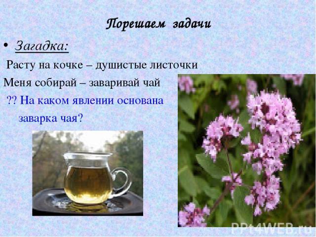 Порешаем задачи Загадка: Расту на кочке – душистые листочки Меня собирай – заваривай чай ?? На каком явлении основана заварка чая?