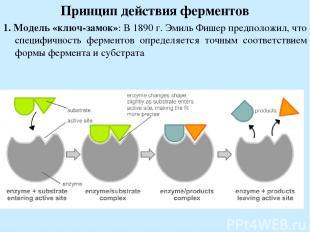 Принцип действия ферментов 1. Модель «ключ-замок»: В 1890 г. Эмиль Фишер предпол