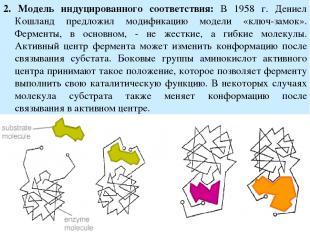 2. Модель индуцированного соответствия: В 1958 г. Дениел Кошланд предложил модиф