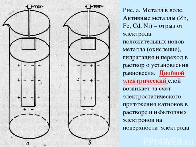 Рис. а. Металл в воде. Активные металлы (Zn, Fe, Cd, Ni) – отрыв от электрода положительных ионов металла (окисление), гидратация и переход в раствор о установления равновесия. Двойной электрический слой возникает за счет электростатического притяже…
