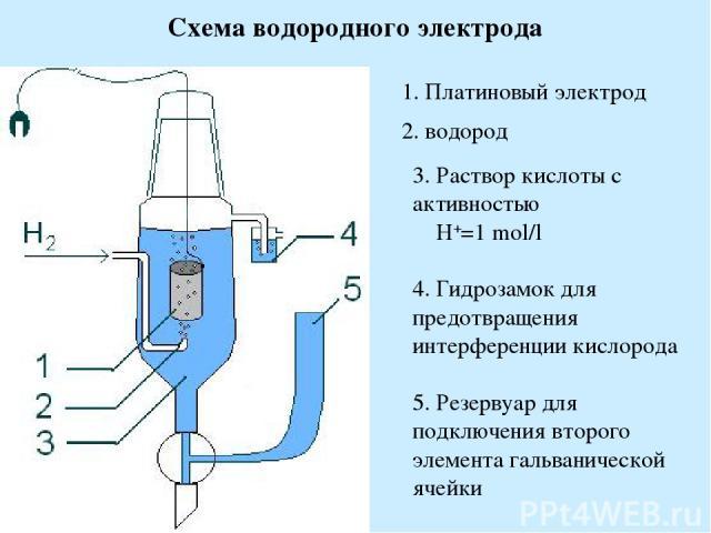 Схема водородного электрода 1. Платиновый электрод 2. водород 3. Раствор кислоты с активностью H+=1 mol/l 4. Гидрозамок для предотвращения интерференции кислорода 5. Резервуар для подключения второго элемента гальванической ячейки