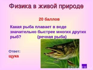20 баллов Какая рыба плавает в воде значительно быстрее многих других рыб? (речн