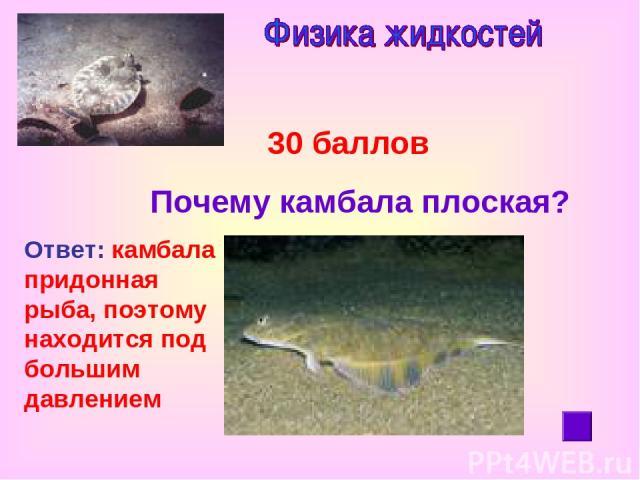 30 баллов Почему камбала плоская? Ответ: камбала придонная рыба, поэтому находится под большим давлением