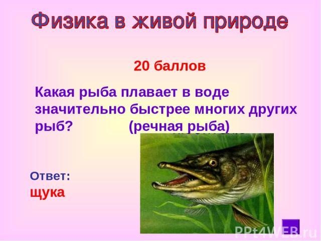 20 баллов Какая рыба плавает в воде значительно быстрее многих других рыб? (речная рыба) Ответ: щука