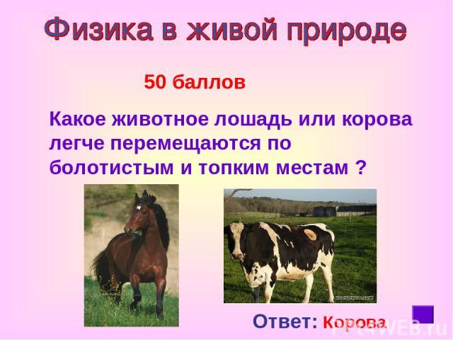 50 баллов Какое животное лошадь или корова легче перемещаются по болотистым и топким местам ? Ответ: Корова