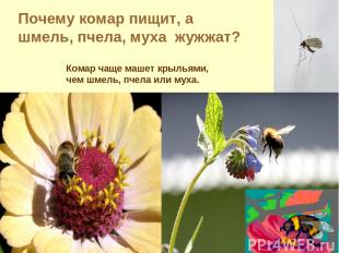 Почему комар пищит, а шмель, пчела, муха жужжат? Комар чаще машет крыльями, чем