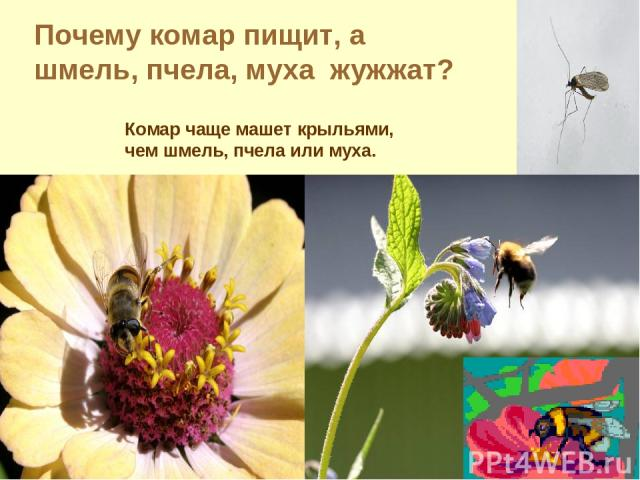 Почему комар пищит, а шмель, пчела, муха жужжат? Комар чаще машет крыльями, чем шмель, пчела или муха.