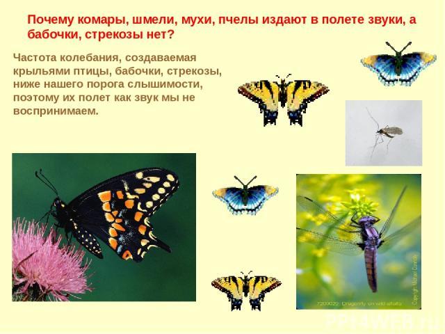 Почему комары, шмели, мухи, пчелы издают в полете звуки, а бабочки, стрекозы нет? Частота колебания, создаваемая крыльями птицы, бабочки, стрекозы, ниже нашего порога слышимости, поэтому их полет как звук мы не воспринимаем.