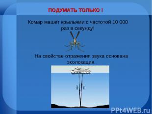 ПОДУМАТЬ ТОЛЬКО ! Комар машет крыльями с частотой 10 000 раз в секунду! На свойс