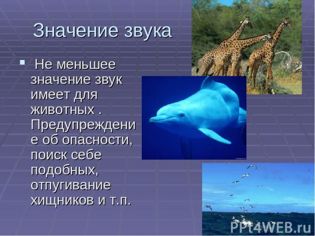 Значение звука Не меньшее значение звук имеет для животных . Предупреждение об опасности, поиск себе подобных, отпугивание хищников и т.п.
