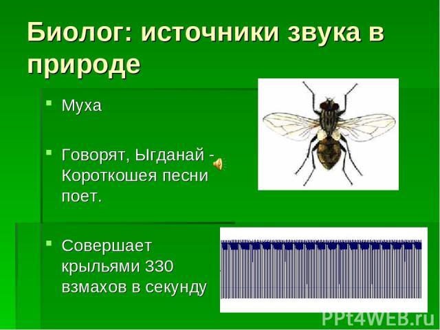 Биолог: источники звука в природе Муха Говорят, Ыгданай - Короткошея песни поет. Совершает крыльями 330 взмахов в секунду