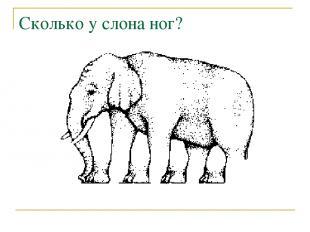 Сколько у слона ног?