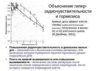 Объяснение гипер-радиочувствительности и гормезиса Повышенная радиочувствительно