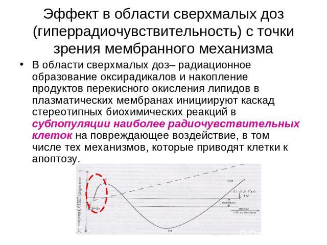 Эффект в области сверхмалых доз (гиперрадиочувствительность) с точки зрения мембранного механизма В области сверхмалых доз– радиационное образование оксирадикалов и накопление продуктов перекисного окисления липидов в плазматических мембранах иниции…