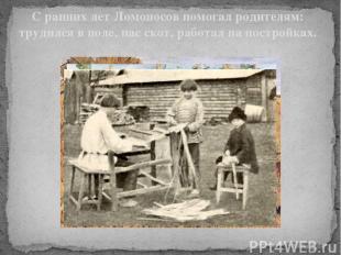 С ранних лет Ломоносов помогал родителям: трудился в поле, пас скот, работал на