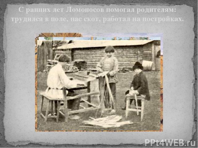С ранних лет Ломоносов помогал родителям: трудился в поле, пас скот, работал на постройках. С ранних лет Ломоносов помогал родителям: трудился в поле, пас скот, работал на постройках.