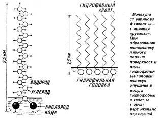 Молекула стеариновой кислоты – типичная «русалка». При образовании мономолекуляр