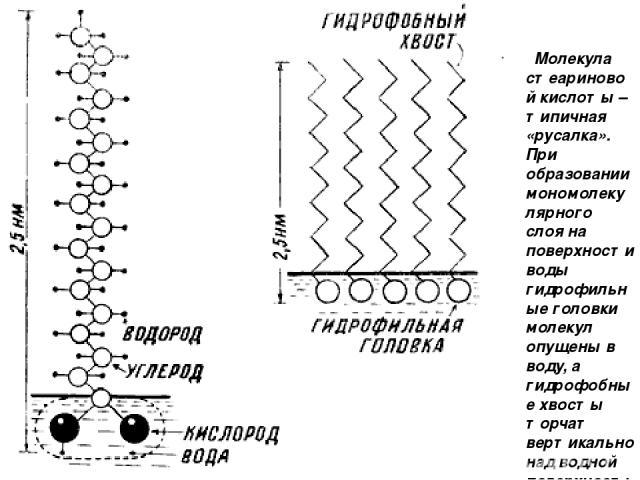 Молекула стеариновой кислоты – типичная «русалка». При образовании мономолекулярного слоя на поверхности воды гидрофильные головки молекул опущены в воду, а гидрофобные хвосты торчат вертикально над водной поверхностью.