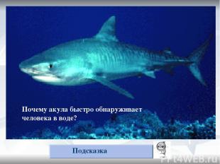Почему акула быстро обнаруживает упавшего в воду человека? Подсказка Почему акул