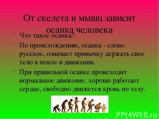 От скелета и мышц зависит осанка человека Что такое осанка? По происхождению, осанка - слово русское, означает привычку держать свое тело в покое и движении. При правильной осанке происходит нормальное движение, хорошо работает сердце, свободно движ…