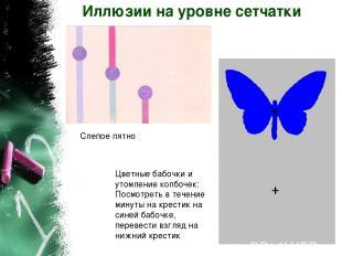 Иллюзии на уровне сетчатки Слепое пятно Цветные бабочки и утомление колбочек: По