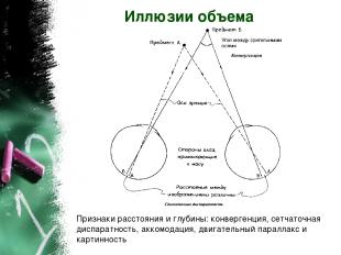 Иллюзии объема Признаки расстояния и глубины: конвергенция, сетчаточная диспарат