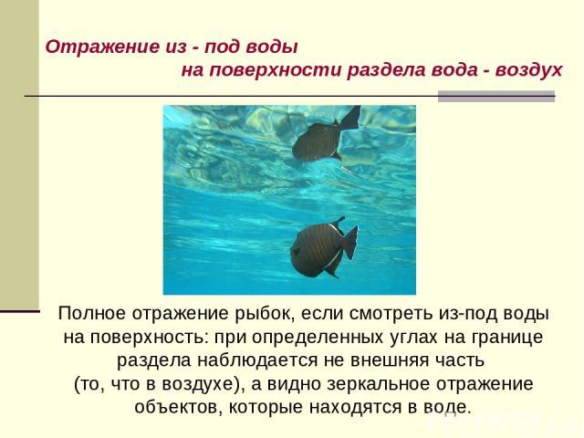 Отражение из - под воды на поверхности раздела вода - воздух Полное отражение рыбок, если смотреть из-под воды на поверхность: при определенных углах на границе раздела наблюдается не внешняя часть (то, что в воздухе), а видно зеркальное отражение о…
