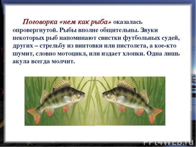 Поговорка «нем как рыба» оказалась опровергнутой. Рыбы вполне общительны. Звуки некоторых рыб напоминают свистки футбольных судей, других – стрельбу из винтовки или пистолета, а кое-кто шумит, словно мотоцикл, или издает хлопки. Одна лишь акула всег…