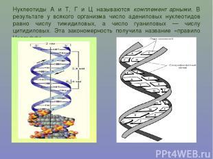 Нуклеотиды А и Т, Г и Ц называются комплементарными. В результате у всякого орга