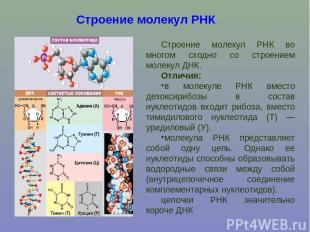 Строение молекул РНК. Строение молекул РНК во многом сходно со строением молекул