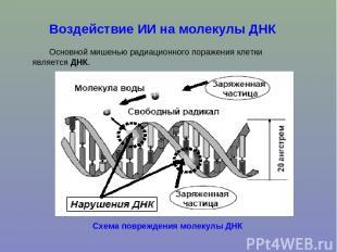 Воздействие ИИ на молекулы ДНК Основной мишенью радиационного поражения клетки я