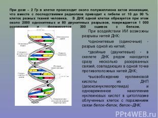 При дозе ~ 2 Гр в клетке происходит около полумиллиона актов ионизации, что вмес