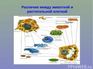 Различия между животной и растительной клеткой