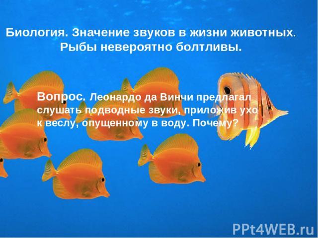 Биология. Значение звуков в жизни животных. Рыбы невероятно болтливы. Вопрос. Леонардо да Винчи предлагал слушать подводные звуки, приложив ухо к веслу, опущенному в воду. Почему?