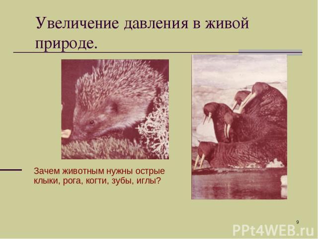 * Зачем животным нужны острые клыки, рога, когти, зубы, иглы? Увеличение давления в живой природе.