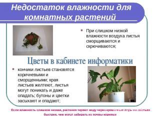 Недостаток влажности для комнатных растений При слишком низкой влажности воздуха