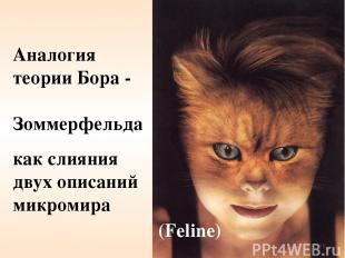 Аналогия теории Бора - Зоммерфельда как слияния двух описаний микромира (Feline)
