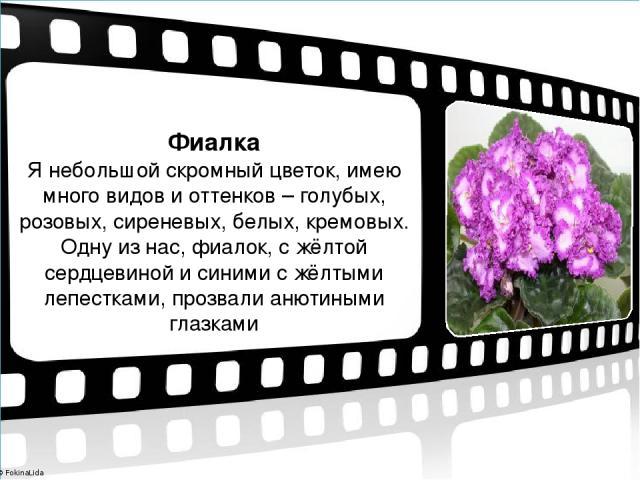 Фиалка Я небольшой скромный цветок, имею много видов и оттенков – голубых, розовых, сиреневых, белых, кремовых. Одну из нас, фиалок, с жёлтой сердцевиной и синими с жёлтыми лепестками, прозвали анютиными глазками © FokinaLida © FokinaLida