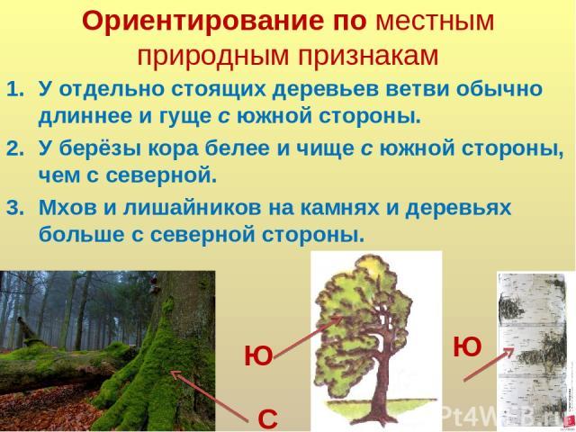 Ориентирование по местным природным признакам У отдельно стоящих деревьев ветви обычно длиннее и гуще с южной стороны. У берёзы кора белее и чище с южной стороны, чем с северной. Мхов и лишайников на камнях и деревьях больше с северной стороны. Ю С Ю
