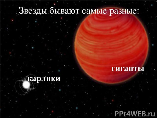 Звезды бывают самые разные: карлики гиганты