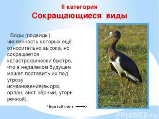 II категория Сокращающиеся виды Виды (подвиды), численность которых ещё относите