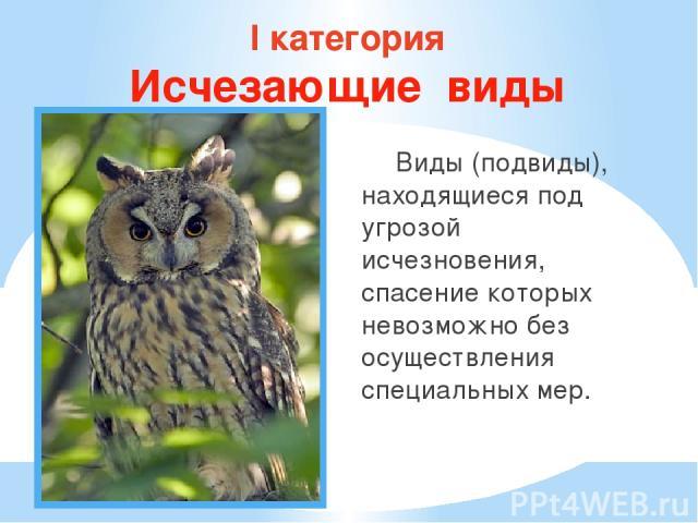 I категория Исчезающие виды Виды (подвиды), находящиеся под угрозой исчезновения, спасение которых невозможно без осуществления специальных мер.