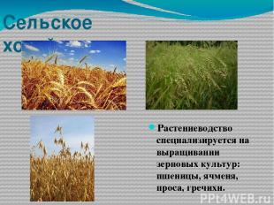 Сельское хозяйство Растениеводство специализируется на выращивании зерновых куль
