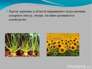 Кроме зерновых в области выращивают подсолнечник, сахарную свёклу, овощи. Активн