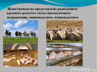 Животноводство представлено разведением крупного рогатого скота мясомолочного на