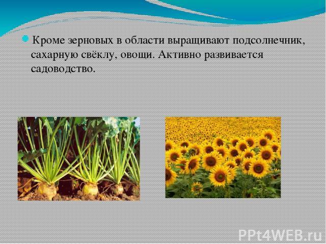 Кроме зерновых в области выращивают подсолнечник, сахарную свёклу, овощи. Активно развивается садоводство.
