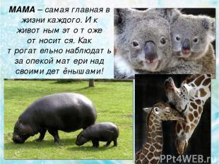 МАМА – cамая главная в жизни каждого. И к животным это тоже относится. Как трога