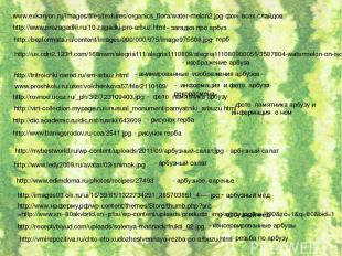 www.exkaryon.ru/images/files/textures/organics_flora/water-melon2.jpg - фон всех